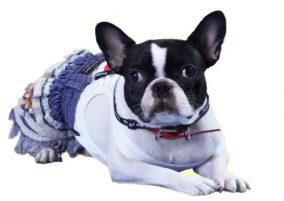 חצאית שכבות לכלבה