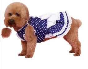 שמלה לכלב בסגנון עוזרת בית