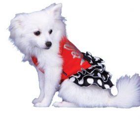 שמלת הלו לכלב