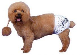 הלבשה תחתונה לכלב תברואתי - כוכב לבן